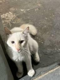Gatinhos brancos para adoção