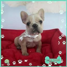 Bulldog Frances Femea - Promoção Relampago na Wet Nose - Sabado e Domingo