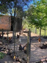 Chácara 10 hectares - Pinheiro Machado