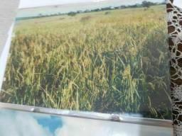 Fazenda Buritis.m.gerais 90 hec.