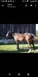 Cavalo (pouco mais de 2anos)