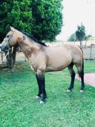Cavalo e potras