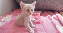 Gatinhos, adoção