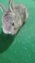 Vende-se mini coelhinhos