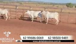 BOV3214 - 200 vacas magras - negócio excelente para você confinador e invernista!