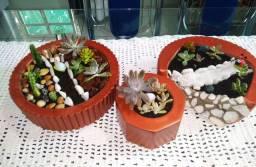 Mini jardim de suculentas!!