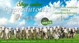 Top leiloes rurais oferta touros reprodutores nelore com registro (frete free)