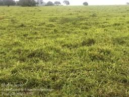 Fazenda em Vila Propício-Go!