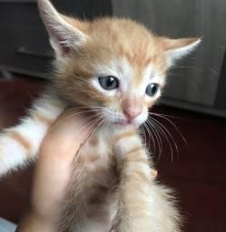 Estou doando 4 gatinhos filhotes
