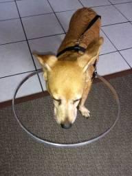 Guia cão cego,
