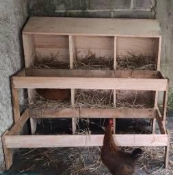 Ninho para galinha poedeira