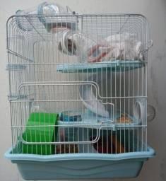 Gaiola com hamster anão russo