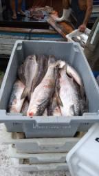 Vendas de pescados exclusivas