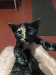 Doa-se esta linda gatinha