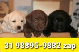 Título do anúncio: Canil Filhotes Cães Selecionados BH Labrador Pastor Akita Boxer Rottweiler Pastor