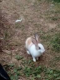 Título do anúncio: Vendo coelho macho