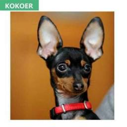 Grupo de Pinscher no whats app