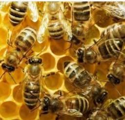 Quem é que tem um enxame de abelha?