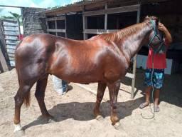 Vendo cavalo de direita 3.000 leia a descrição