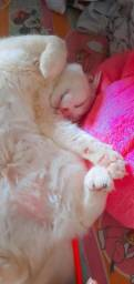Doando linda gatinha