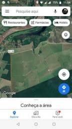 Área plantação