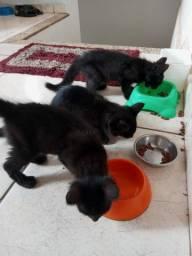 4 fêmeas filhote para doação