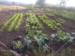 Procuro sítio ou fazenda pra arrendar nos campos da serra  Rs