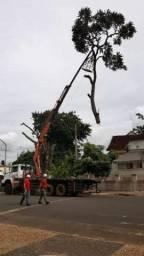 Faça já seu orçamento poda de árvore e cortamos Gerais