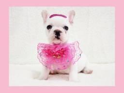 Bulldog francês fêmea branquinha, confiram aqui na loja Namu Royal!