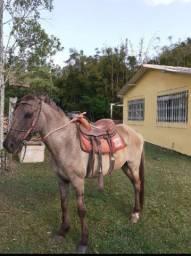 Cavalo Esperto