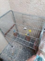 Vende de gaiola
