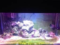 Vendo Aquario marinho
