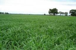 Vendo Fazenda em Fortuna-Ma 290 Hectares.