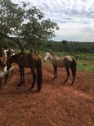 Vendo dois cavalos barato!!!!!