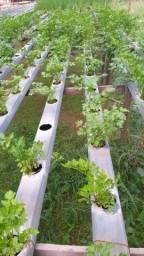 Perfil para Cultivo Hidroponico