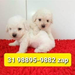 Título do anúncio: Canil Filhotes Cães Perfeitos BH Poodle Lhasa Yorkshire Shihtzu Maltês