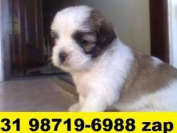Canil Filhotes Top Cães BH Lhasa Poodle Yorkshire Shihtzu Maltês Yorkshire
