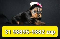 Título do anúncio: Canil Filhotes Cães Líder BH Yorkshire Poodle Maltês Shihtzu Basset Lhasa