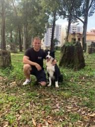 Adestramento de cães positivo :)