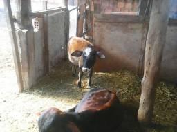 Mini touro