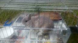 Mini coelho e gaiola