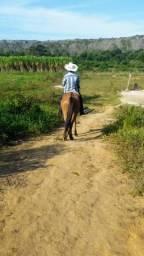 Cavalo baio macha picada