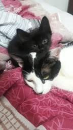 Doa se 3 gatinhos lindos