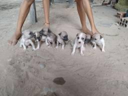 Doa-se cachorrinhos