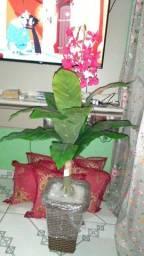 Lindas plantas artificiais