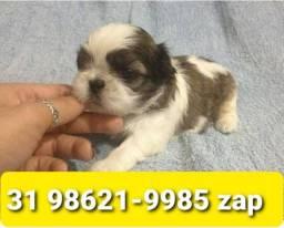 Título do anúncio: Canil Maravilhosos Filhotes Cães BH Shihtzu Maltês Yorkshire Poodle Lhasa