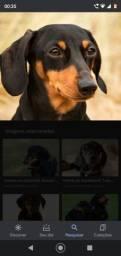 Título do anúncio: Se alguém tiver cachorrinha base fêmea