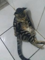 Gato de botas(sem botas e não é laranja) official