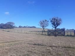 Arrendo área pra soja 127 hectare