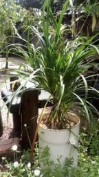 Plantas para jardinagem